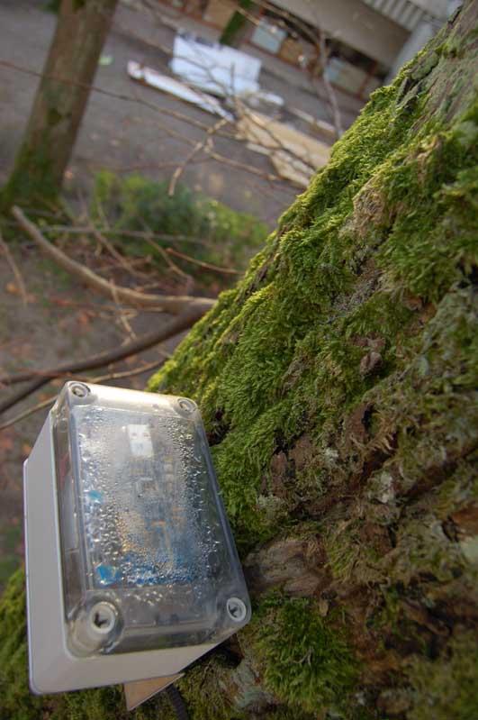Sensor and vegetation.jpg