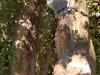 fungus grown on the tree while the sensor was working.jpg